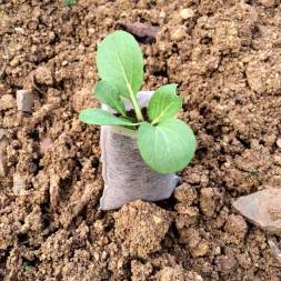 Seed Germination Bag (5 pcs)