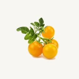 Yellow Cherry Tomato Seeds F1 Hybrid (25 Seeds)